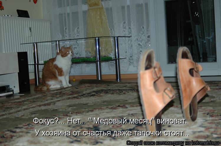 """Котоматрица: Фокус?... Нет... """" Медовый месяц"""" виноват. У хозяина от счастья даже тапочки стоят..."""
