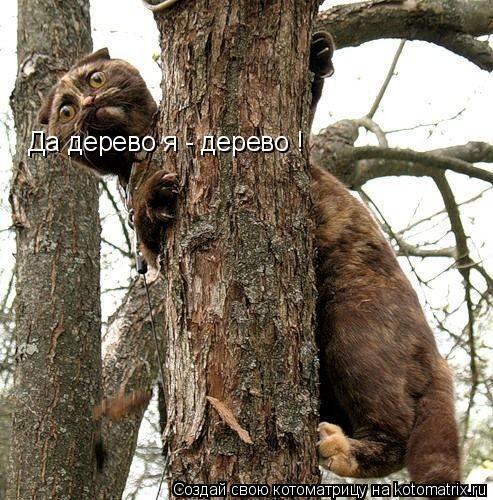 Котоматрица: Да дерево я - дерево !