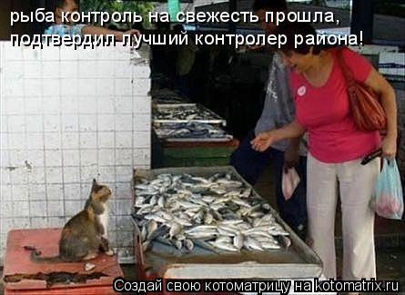 Котоматрица: рыба контроль на свежесть прошла, подтвердил лучший контролер района!