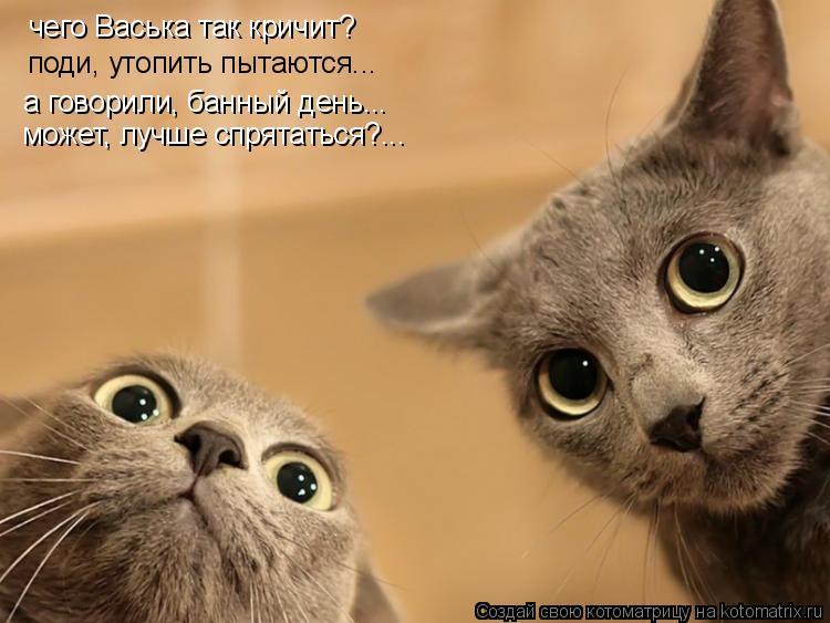 Котоматрица: чего Васька так кричит? поди, утопить пытаются... а говорили, банный день... может, лучше спрятаться?...