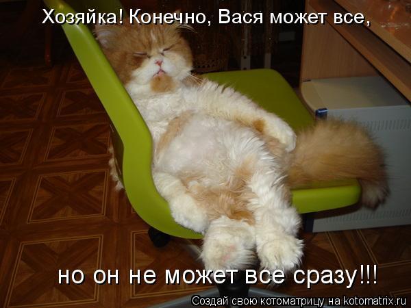 Котоматрица - Хозяйка! Конечно, Вася может все, но он не может все сразу!!!