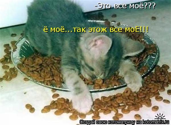 Котоматрица: -Это все моё??? ё моё...так этож все моЕ!!!