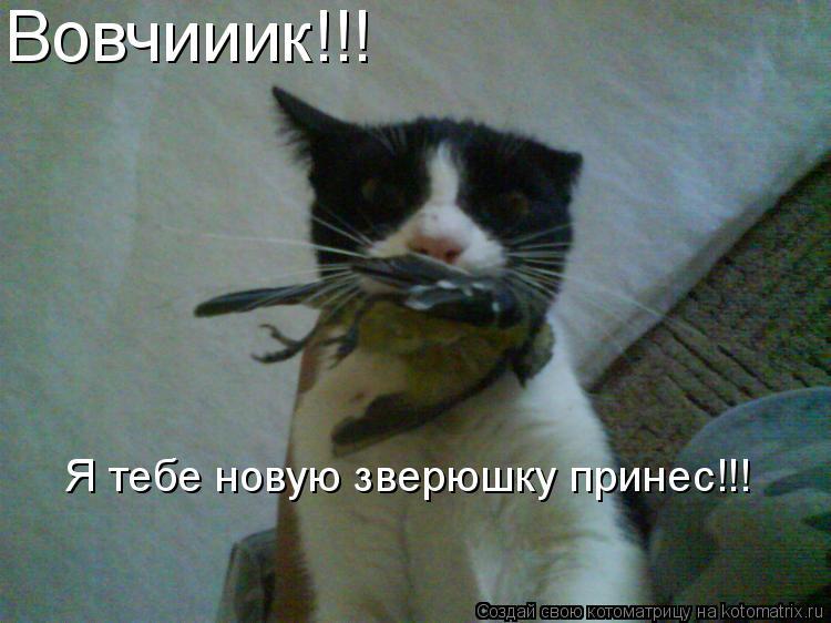 Котоматрица: Вовчииик!!! Я тебе новую зверюшку принес!!!