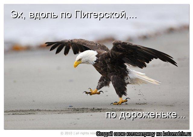 Котоматрица: Эх, вдоль по Питерской,... по дороженьке...