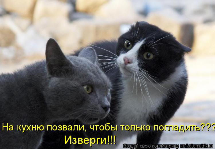 Котоматрица: На кухню позвали, чтобы только погладить???!!! Изверги!!!