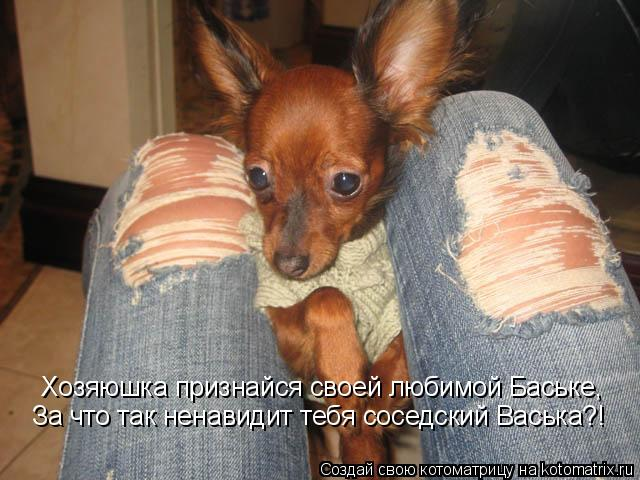 Котоматрица: Хозяюшка признайся своей любимой Баське, Хозяюшка признайся своей любимой Баське, За что так ненавидит тебя соседский Васька?!
