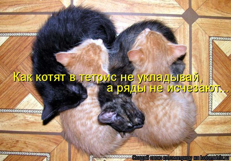 Котоматрица - Как котят в тетрис не укладывай, а ряды не исчезают...