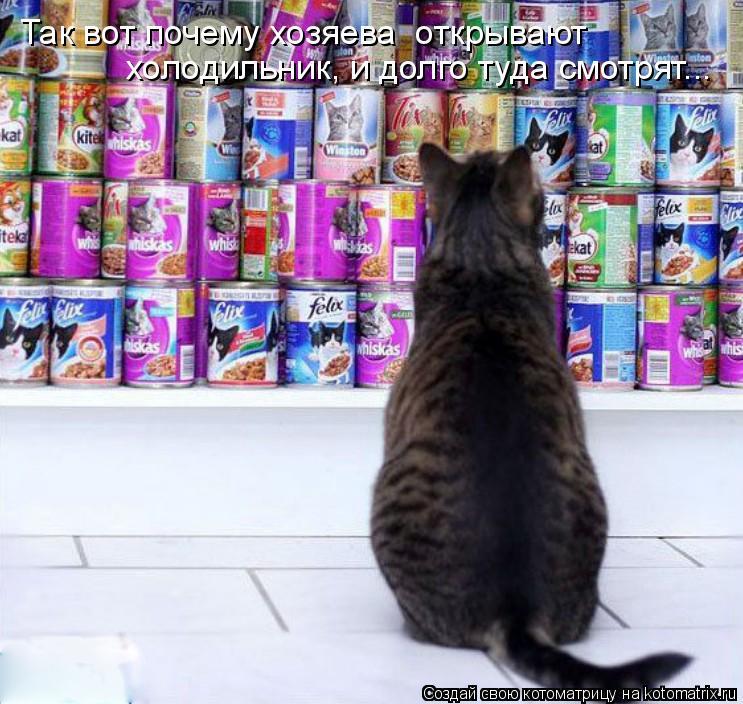 Котоматрица: Так вот почему хозяева  открывают  холодильник, и долго туда смотрят...