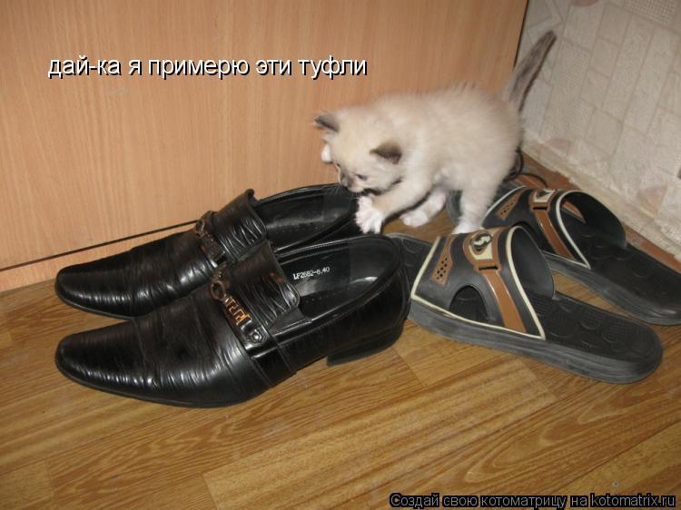 Котоматрица: дай-ка я примерю эти туфли