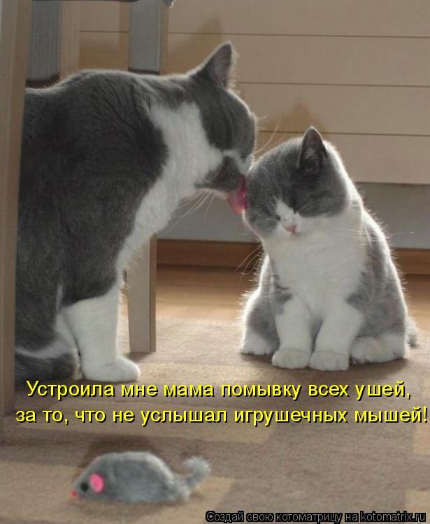 Котоматрица: Устроила мне мама помывку всех ушей, за то, что не услышал игрушечных мышей!