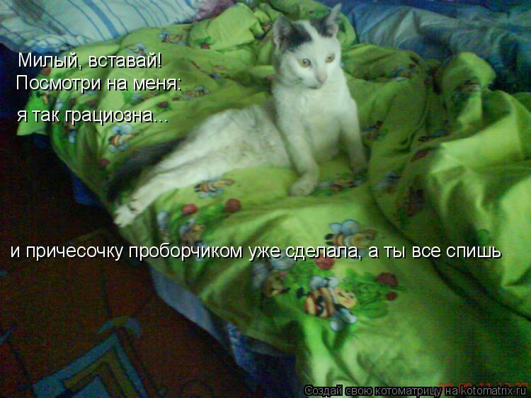 Котоматрица: Милый, вставай! Посмотри на меня: я так грациозна... и причесочку проборчиком уже сделала, а ты все спишь
