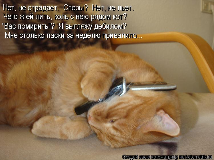 """Котоматрица: Нет, не страдает.  Слезы?  Нет, не льет. Чего ж ей лить, коль с нею рядом кот? """"Вас помирить""""?  Я выгляжу дебилом? Мне столько ласки за неделю прив"""