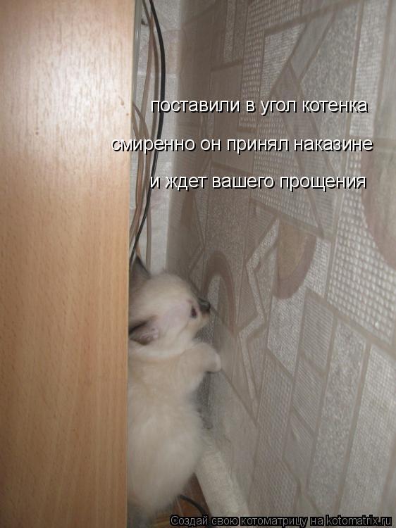 Котоматрица: поставили в угол котенка смиренно он принял наказине и ждет вашего прощения