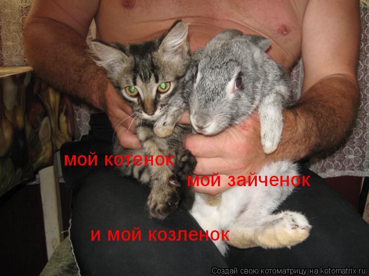 Котоматрица: мой котенок мой зайченок и мой козленок