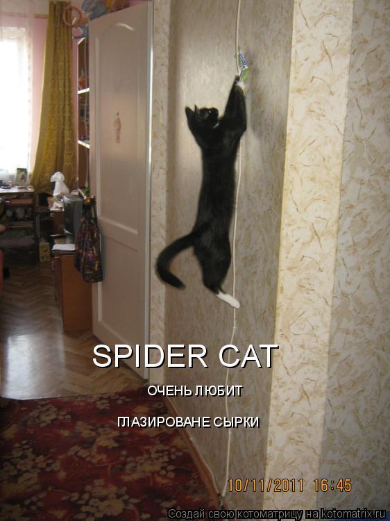 Котоматрица: SPIDER CAT  ОЧЕНЬ ЛЮБИТ ГЛАЗИРОВАНЕ СЫРКИ