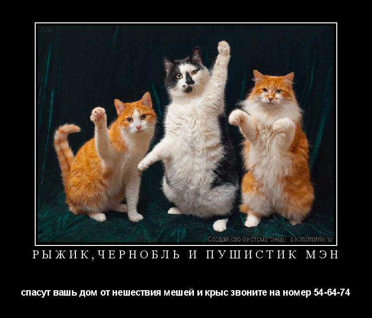 Котоматрица: рыжик,чернобль и пушистик мэн спасут вашь дом от нешествия мешей и крыс звоните на номер 54-64-74