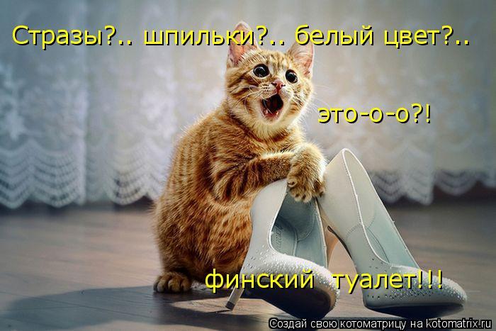 Котоматрица: Стразы?.. шпильки?.. белый цвет?..  это-о-о?! финский  туалет!!!