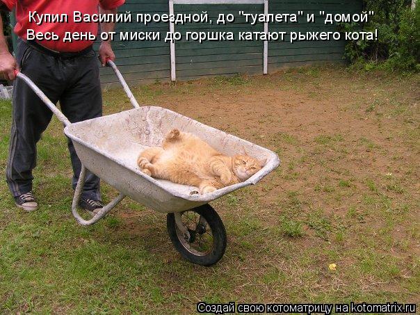 """Котоматрица: Купил Василий проездной, до """"туалета"""" и """"домой"""" Весь день от миски до горшка катают рыжего кота!"""