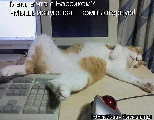 Котоматрица: -Мам, а что с Барсиком? -Мышь испугался... компьютерную!
