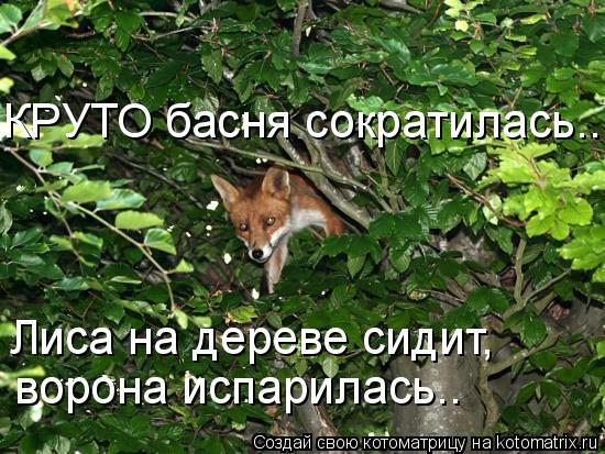 Котоматрица: КРУТО басня сократилась.. Лиса на дереве сидит, ворона испарилась..