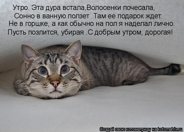 Дневник кота стих эта дура
