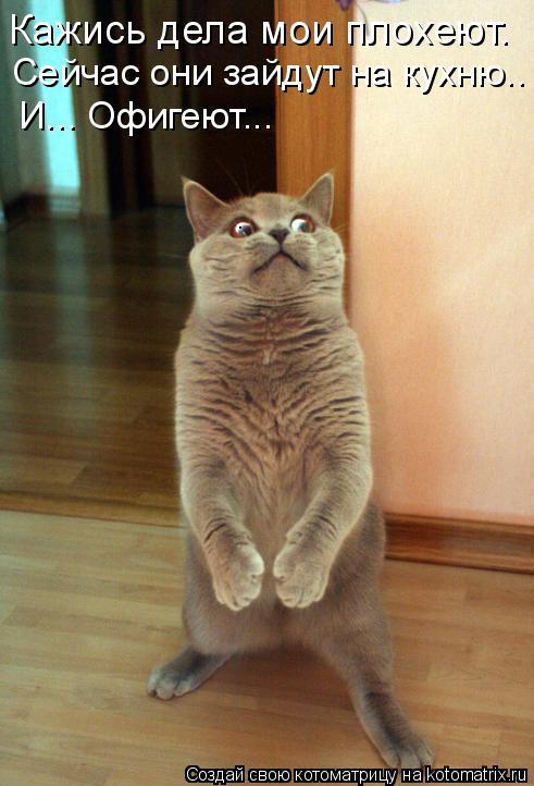 Котоматрица: Кажись дела мои плохеют. Сейчас они зайдут на кухню.. И... Офигеют...