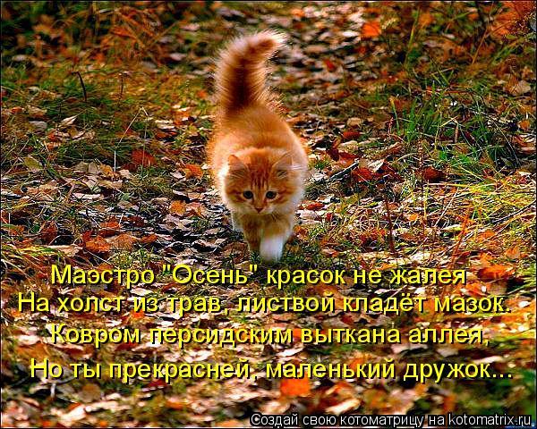 """Котоматрица: Маэстро """"Осень"""" красок не жалея На холст из трав, листвой кладёт мазок. Ковром персидским выткана аллея, Но ты прекрасней, маленький дружок..."""