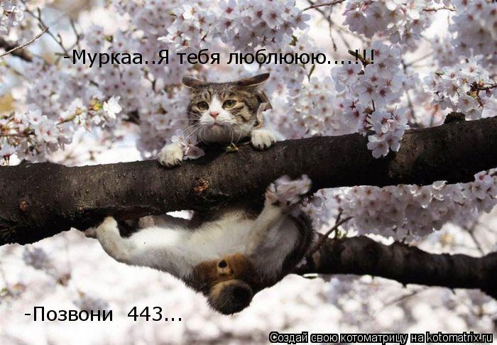 Котоматрица: -Муркаа..Я тебя люблююю....!!! -Позвони  443...