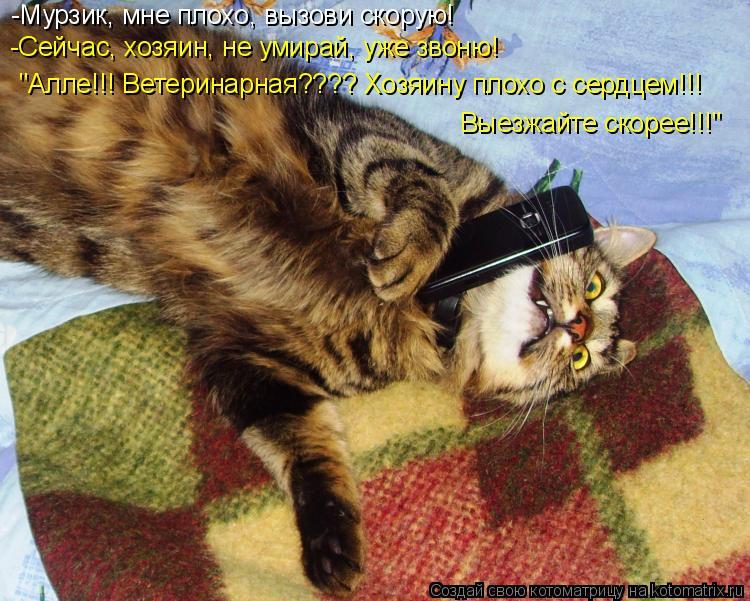 """Котоматрица: -Мурзик, мне плохо, вызови скорую! -Сейчас, хозяин, не умирай, уже звоню! """"Алле!!! Ветеринарная???? Хозяину плохо с сердцем!!!  Выезжайте скорее!!!"""""""