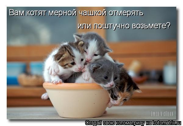 Котоматрица: Вам котят мерной чашкой отмерять  или поштучно возьмете?