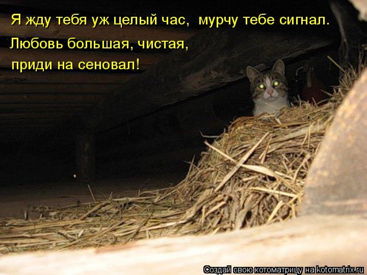 http://kotomatrix.ru/images/lolz/2011/10/17/1016012.jpg