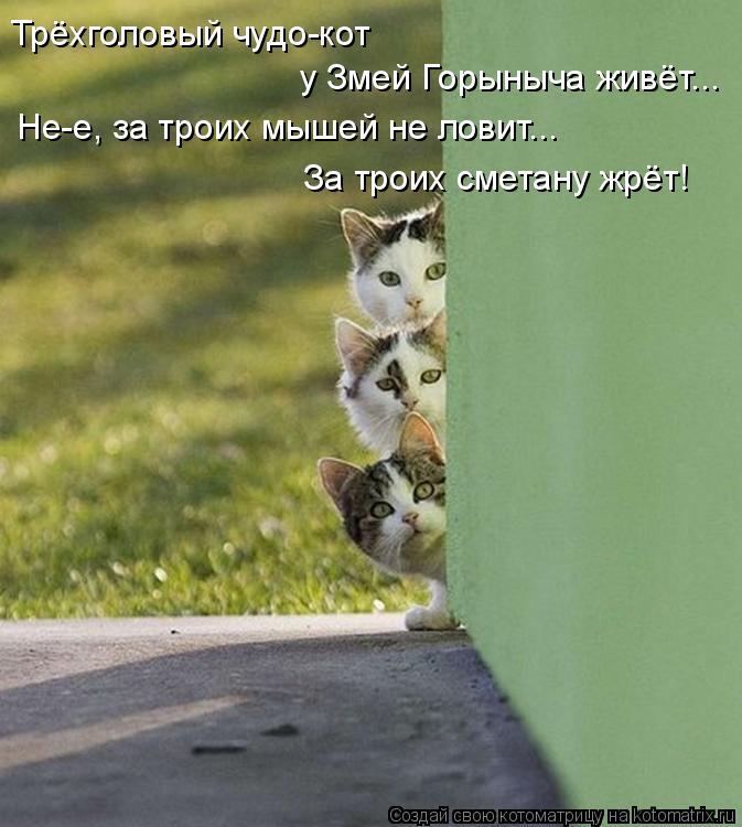Котоматрица: Трёхголовый чудо-кот  у Змей Горыныча живёт... Не-е, за троих мышей не ловит... За троих сметану жрёт!