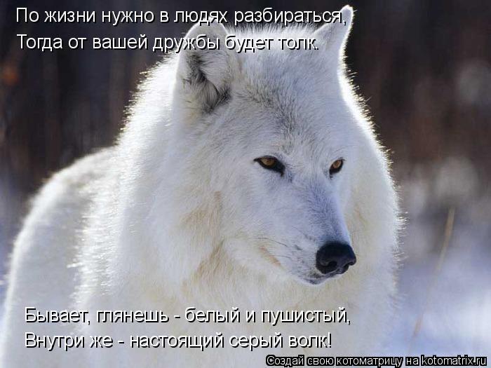 Котоматрица: По жизни нужно в людях разбираться, Тогда от вашей дружбы будет толк. Бывает, глянешь - белый и пушистый, Внутри же - настоящий серый волк!