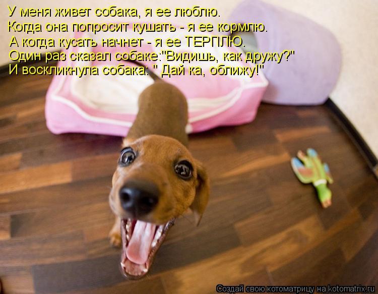 """Котоматрица: У меня живет собака, я ее люблю. Когда она попросит кушать - я ее кормлю. А когда кусать начнет - я ее ТЕРПЛЮ.  Один раз сказал собаке:""""Видишь, ка"""
