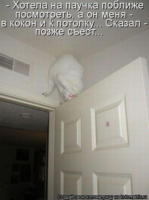 Котоматрица - - Хотела на паучка поближе  посмотреть, а он меня -  в кокон и к потол