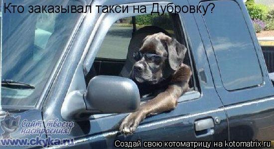 Котоматрица: Кто заказывал такси на Дубровку?