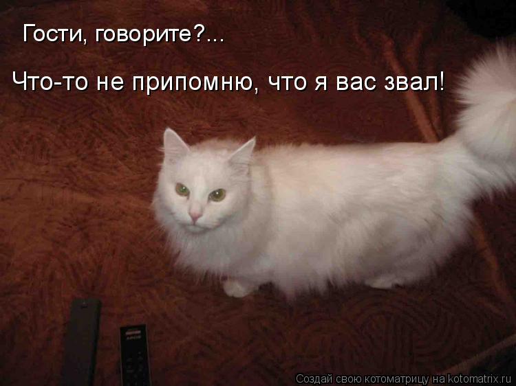 Котоматрица: Гости, говорите?... Что-то не припомню, что я вас звал!
