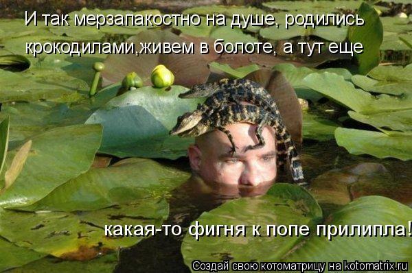 Котоматрица: какая-то фигня к попе прилипла! крокодилами,живем в болоте, а тут еще И так мерзапакостно на душе, родились