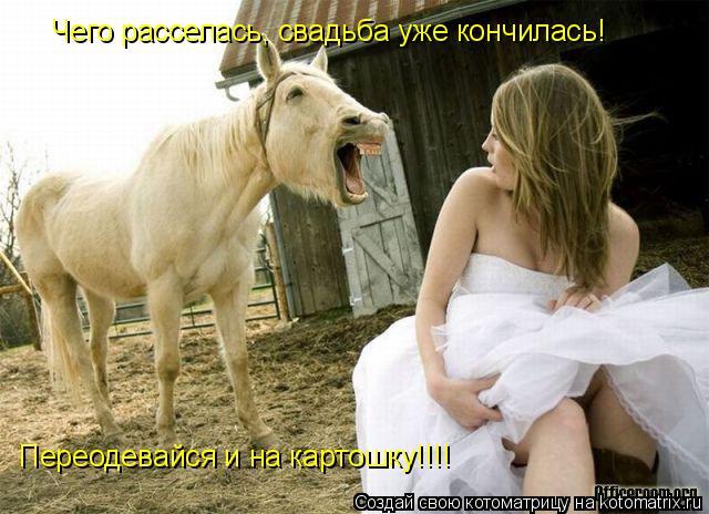 Котоматрица: Чего расселась, свадьба уже кончилась!  Переодевайся и на картошку!!!!