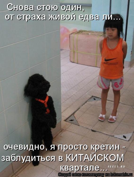 Котоматрица - Снова стою один,  очевидно, я просто кретин -  заблудиться в КИТАЙСКОМ