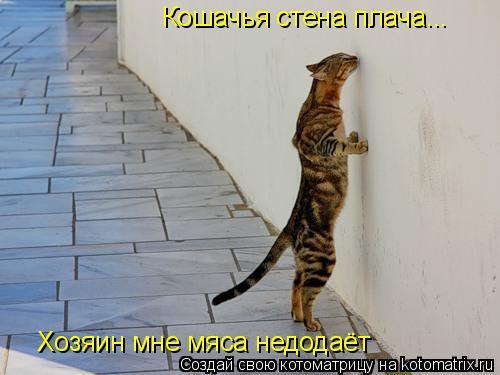 Котоматрица: Кошачья стена плача... Хозяин мне мяса недодаёт