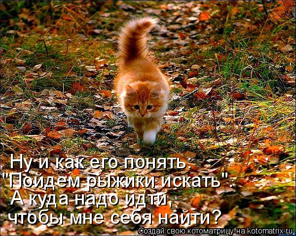 http://kotomatrix.ru/images/lolz/2011/10/18/1016776.jpg