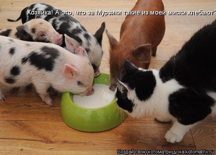 Котоматрица: Хозяйка! А это, что за Мурзики такие из моей миски хлебают?