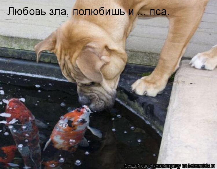 Котоматрица: Любовь зла, полюбишь и ... пса.