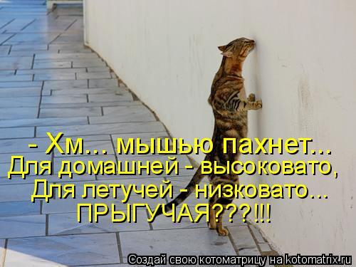Котоматрица: - Хм... мышью пахнет... Для домашней - высоковато,  Для летучей - низковато... ПРЫГУЧАЯ???!!!