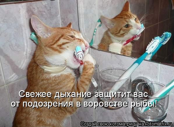 Котоматрица: Свежее дыхание защитит вас от подозрения в воровстве рыбы!