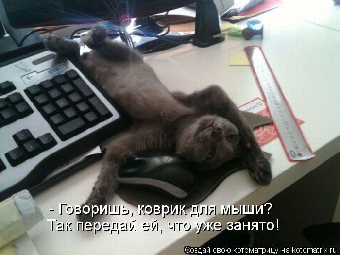Котоматрица: - Говоришь, коврик для мыши?  Так передай ей, что уже занято!