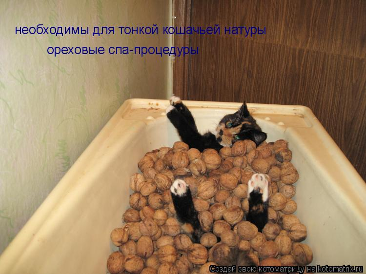Котоматрица: необходимы для тонкой кошачьей натуры ореховые спа-процедуры
