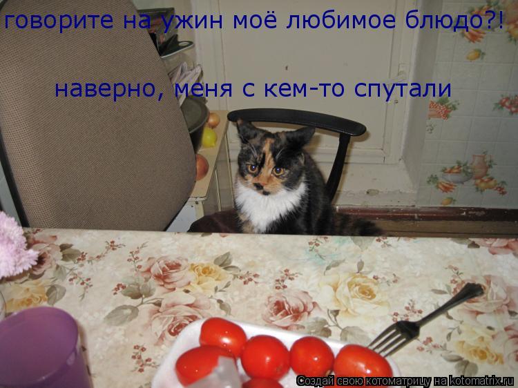 Котоматрица: говорите на ужин моё любимое блюдо?!  наверно, меня с кем-то спутали