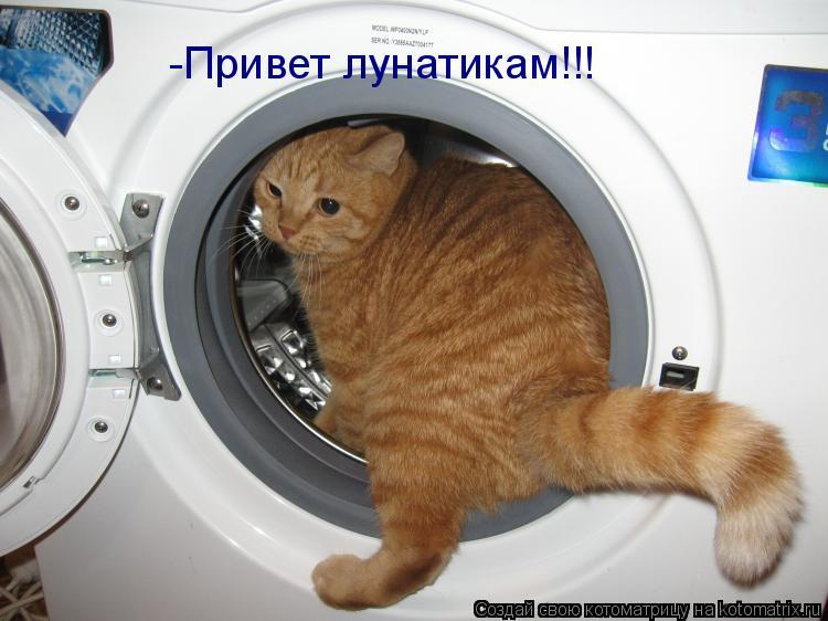 Котоматрица: -Привет лунатикам!!!